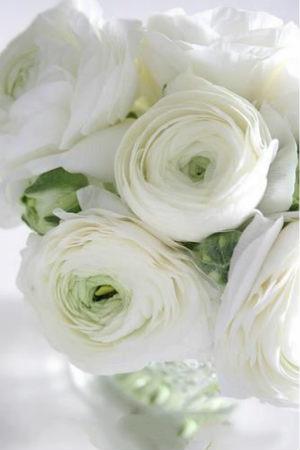 远歌国际_维也纳变奏曲_白玫瑰精魂